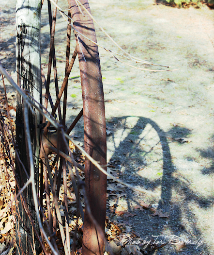 Wagon Wheel Photo by Tori Beveridge