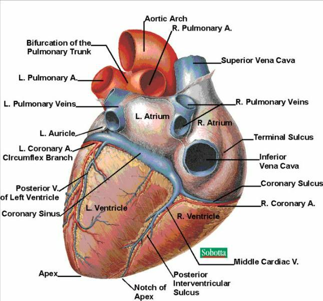 Surajit Parts Of Heart