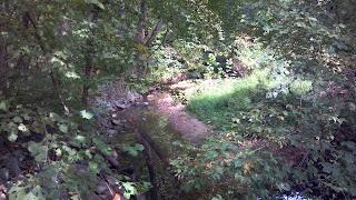 a creek cutting through a forest
