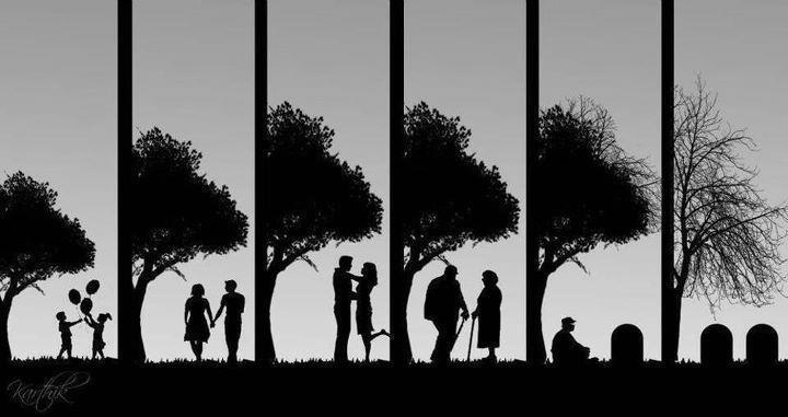 il ciclo della vita