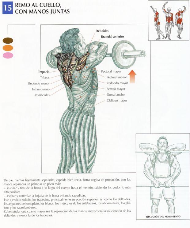 Ejercicios para el gym ejercicios para trapecios for Ejercicios de gym