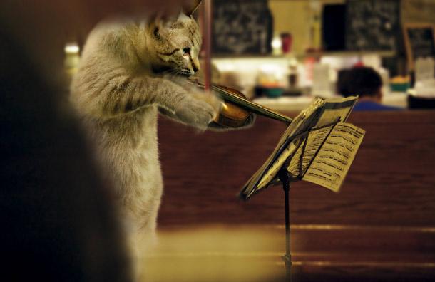 Kucing baca not muzik