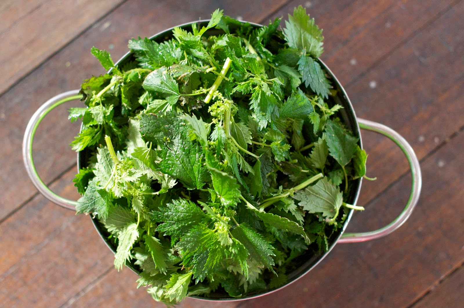 gourmetgirlfriend how to cook stinging nettle