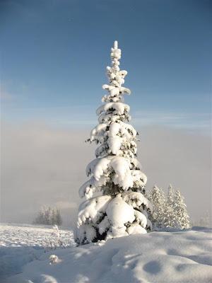 Fur Tree Merry Christmas