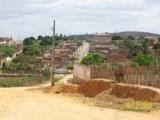 FOTOS DE UMBUZEIRO