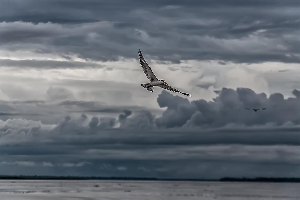ave rio Amazonas