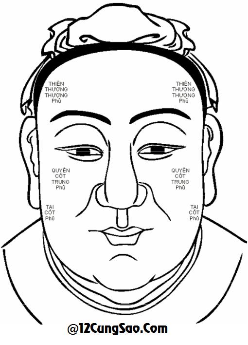 Là  6  cặp  xương  bìa  ngoài  của khuôn mặt. Phủ là kho của trời.