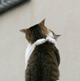 bercinta ala kucing