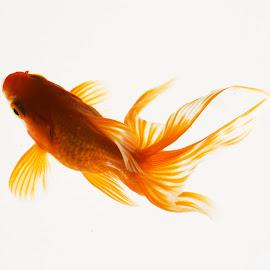 Fish @ Digaleri.com