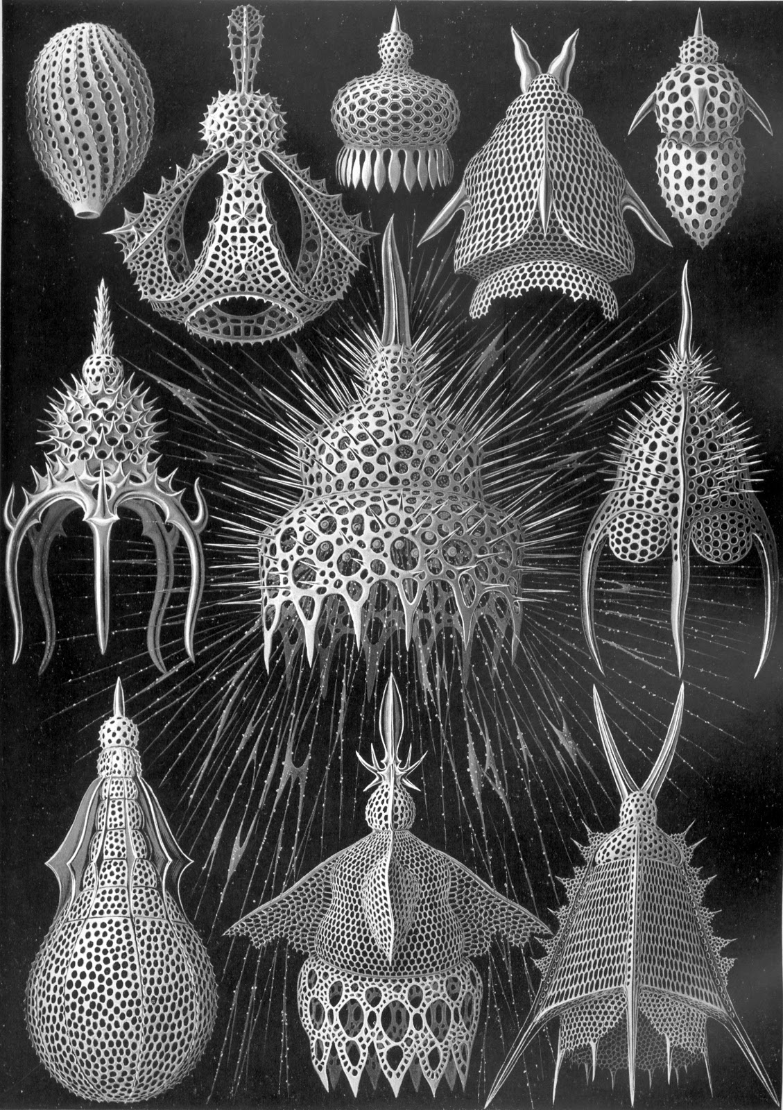 These Creatures Were Beautifully Illustrated By The Victorian Era Biologist Ernst Haeckel In His Kunstformen Der Nature