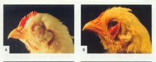 Hình 2.3: Sưng phù đầu, mắt sưng to…