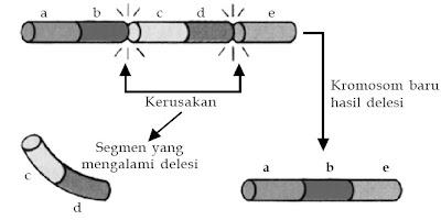delesi kromosom