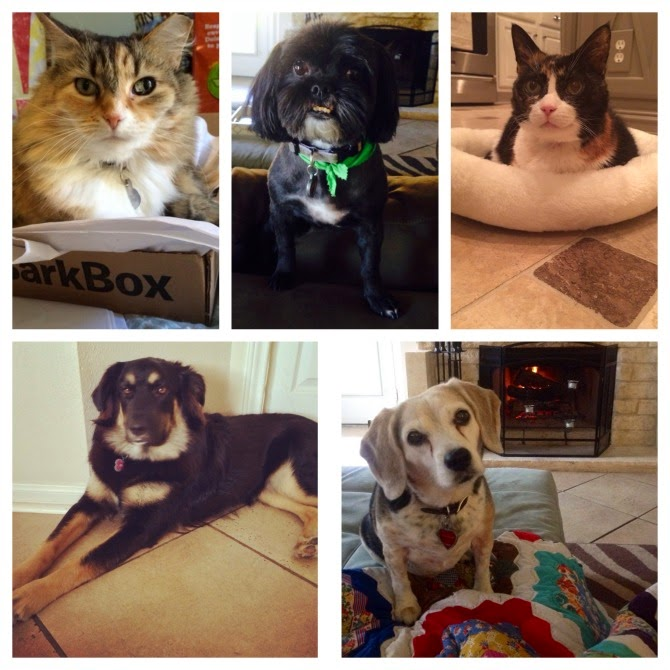 The Holland House: Our Fur Babies