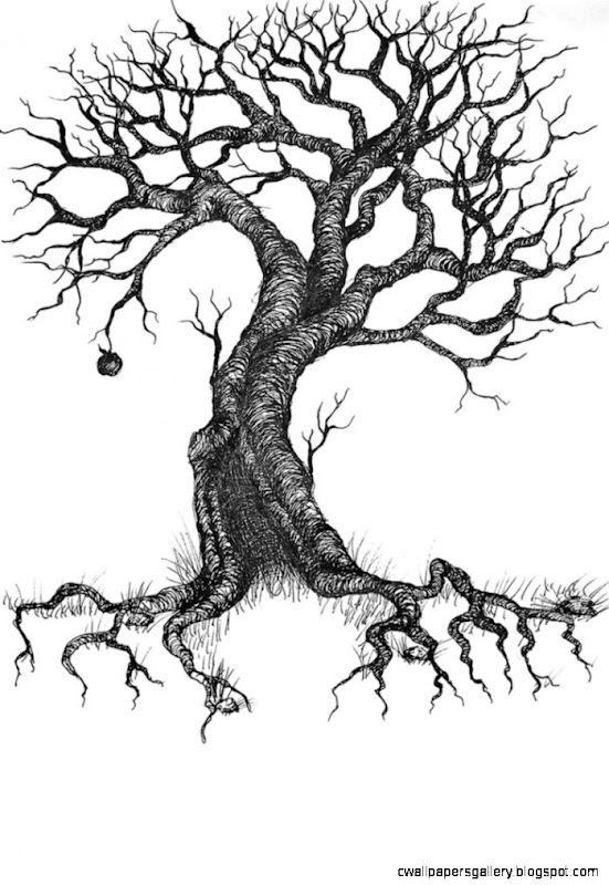 Tattoos on Pinterest  Tree Tattoos Vines and Trees