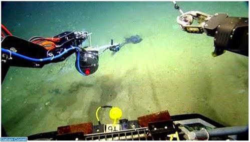 Video Peneroka Nautilus Live Menemui Makhluk Aneh Penghuni di Laut Dalam