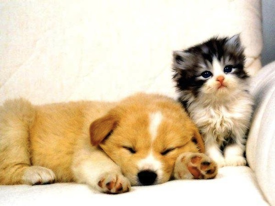 Puppy And Kitten Sleeping Funny kitten and puppy...