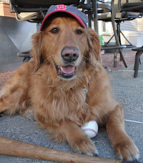Dog Day at Fenway Park, Boston Red Sox