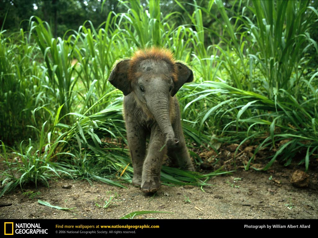 Animals wallpapers elephant wallpaper - Cute elephant pictures ...