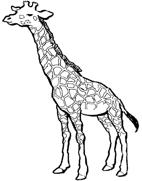Printable Baby Giraffe Coloring Pages