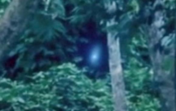 Extraterrestre filmado en la selva de Brasil Alien4_1395170a