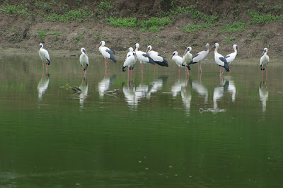 Homeland of Birds in Bharatpur