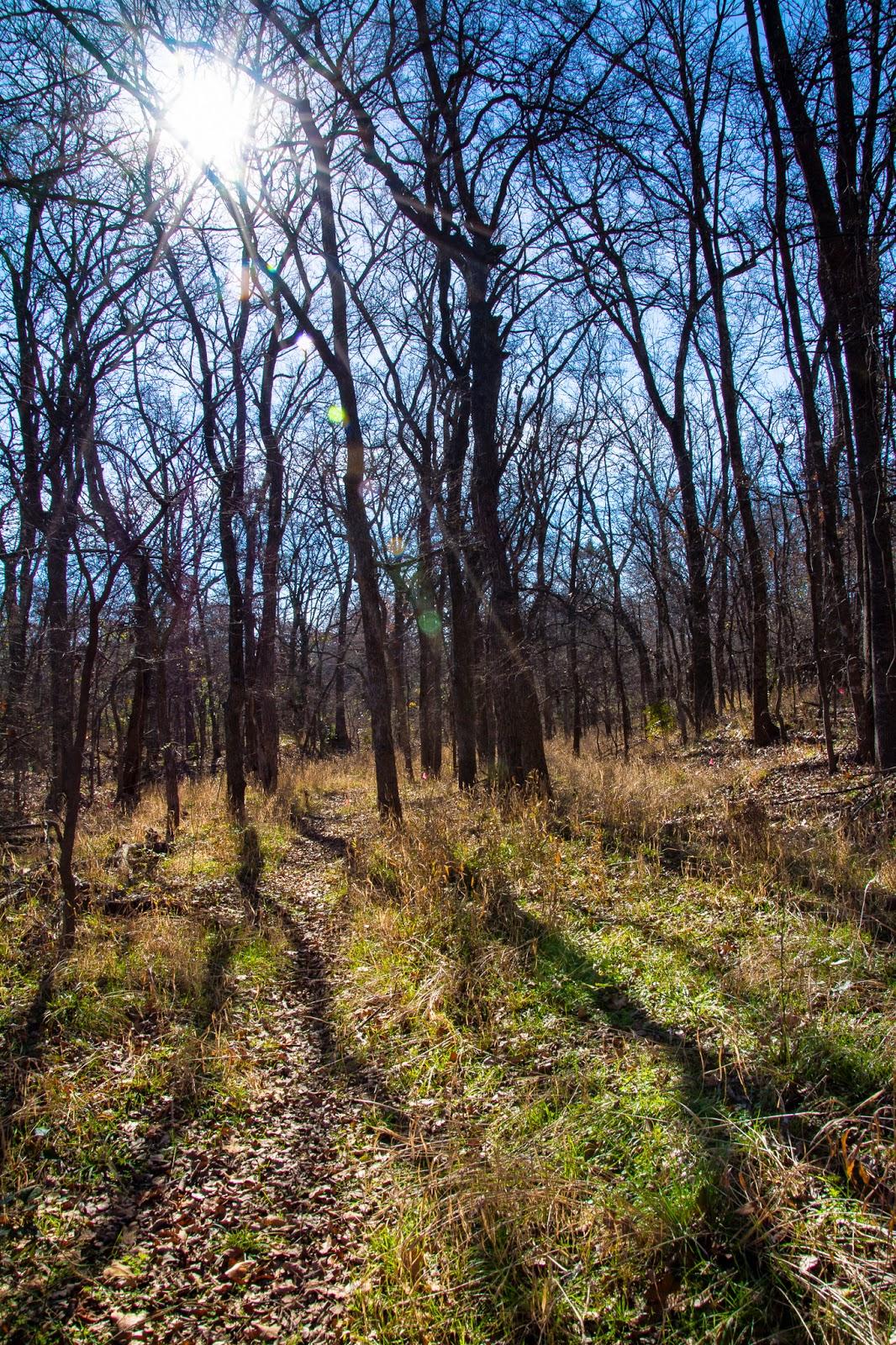 Wichita Forest Trails