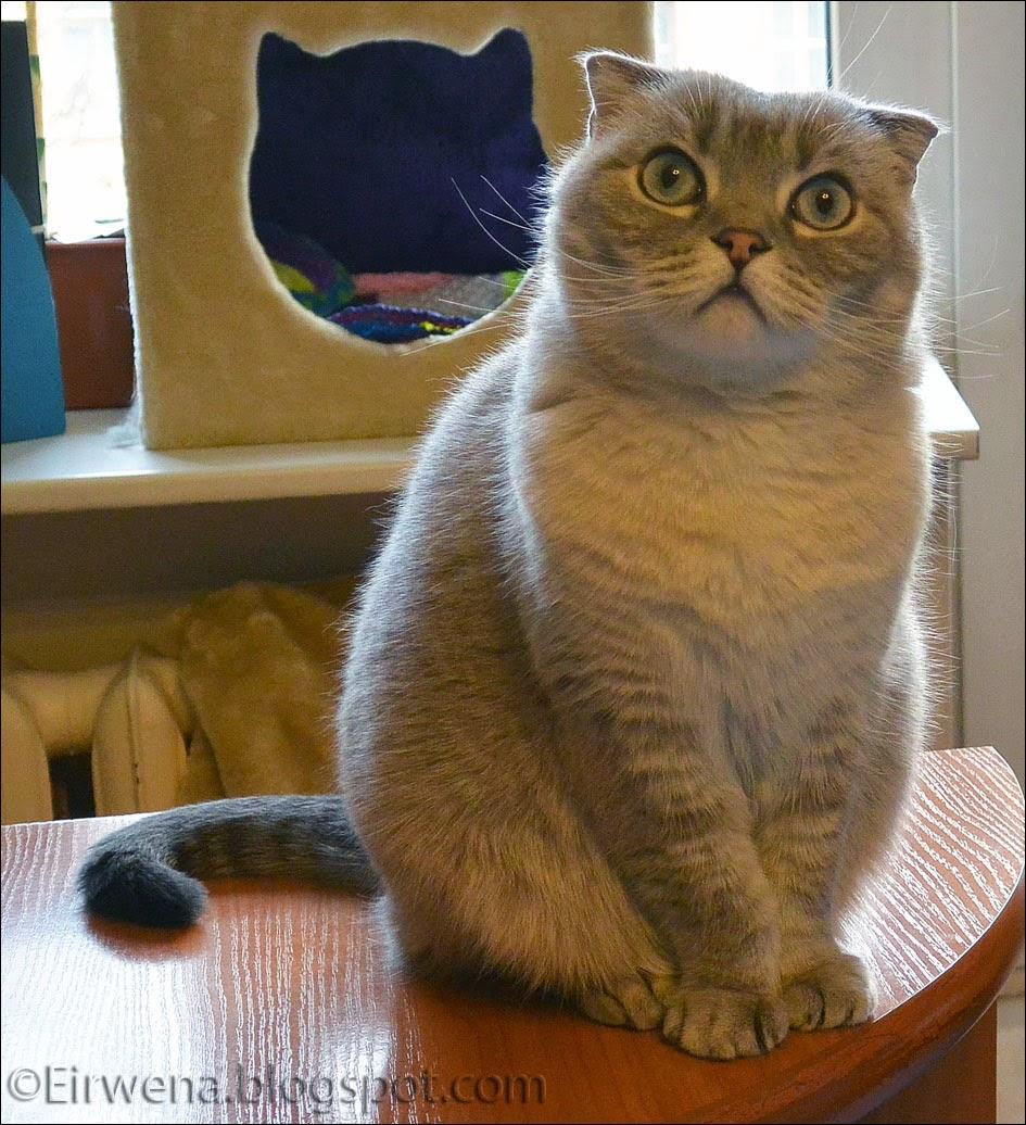 journal d u0026 39 un chat   les aventures d u0026 39 eirwena  le c v  d u0026 39 eirwena