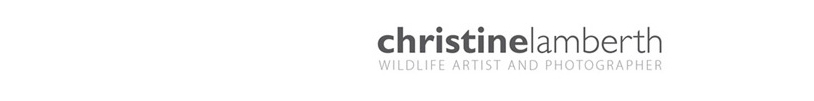 Christine Lamberth Artist and Wildlife Photographer