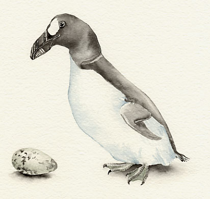 Most Amazing Extinct Arctic Animals The Great Auk