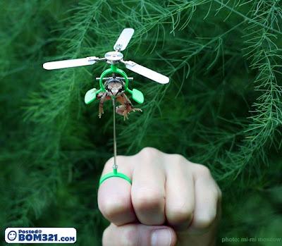 Jika Katak Boleh Terbang