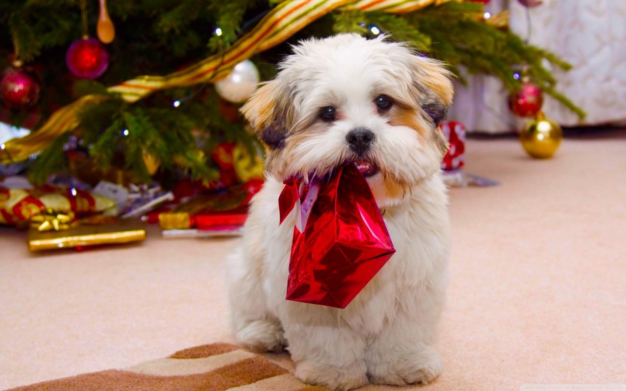 http://3.bp.blogspot.com/-LQuA4SzrFEA/UMjYBKPFPZI/AAAAAAAA9cw/dlmgjKL_D8Q/s1600/cute_dog_christmas-wallpaper-1280x800.jpg