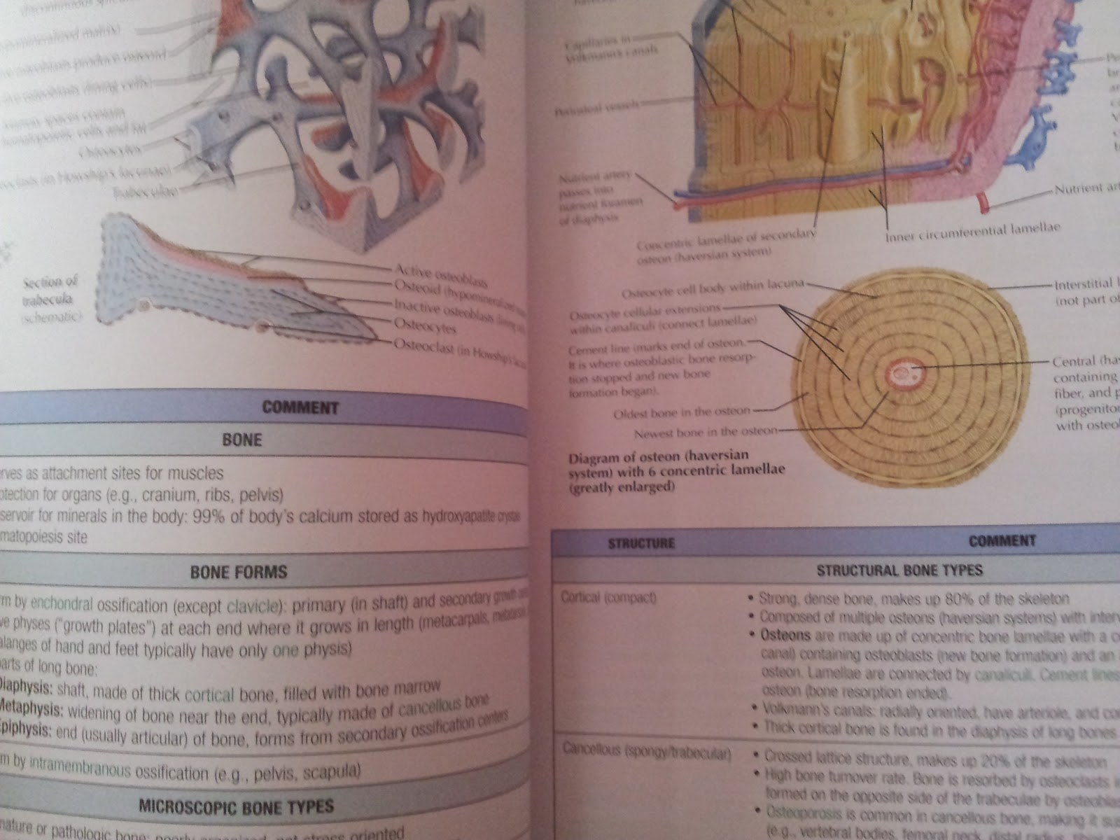 Fancy Netters Orthopedic Anatomy Gallery - Physiology Of Human Body ...