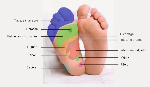 Reflexología Podal: Reflexologia en los pies: pasos para limpiar su ...