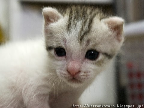 かわいい仔猫の写真 <親ばか