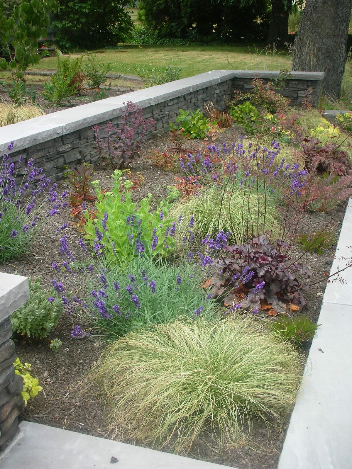 Trillium design bryant entry garden seattle for Low maintenance herb garden