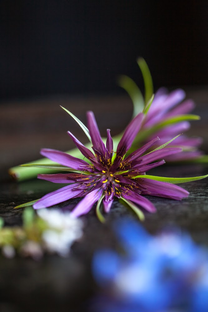 Crackers on the Couch: Edible Flowers, Salsify Flowers