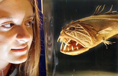 Gambar aneh ikan monster
