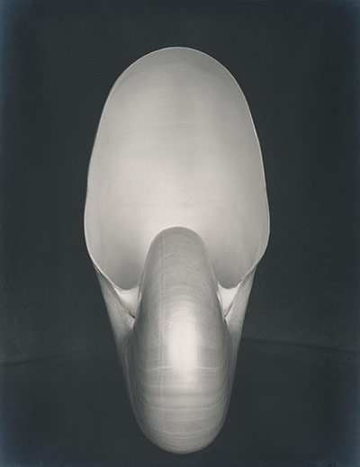 Edward Weston's Nautilus