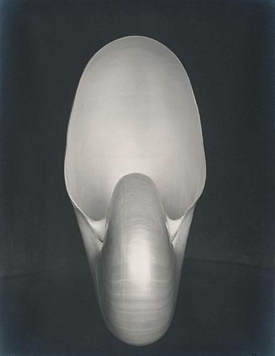 Edward Weston's Nautilus