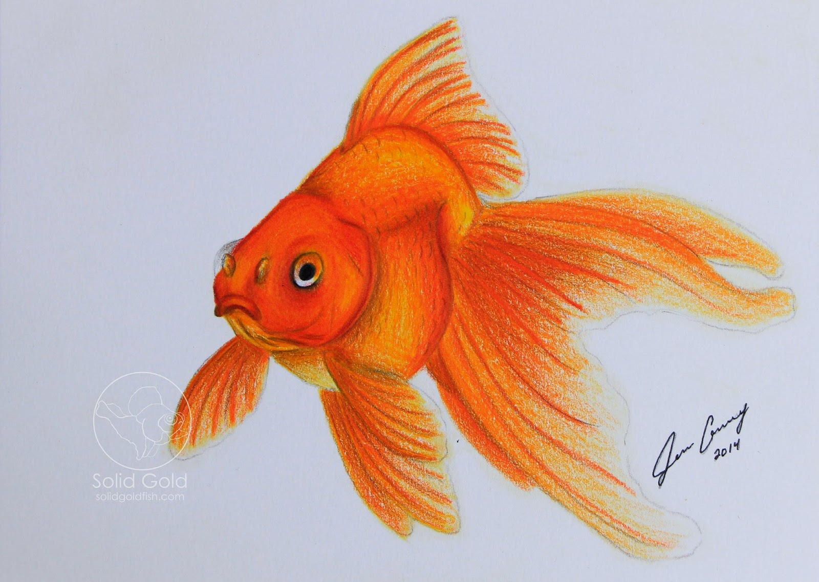 Goldfish drawing for Solid gold fish