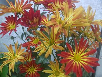 Flores de Casa - 13/09/11
