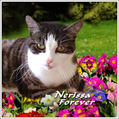 Nerissa  RIP