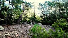 Barranc de la Caritat (Landscape 1)