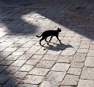Black Cat Superstition Origin