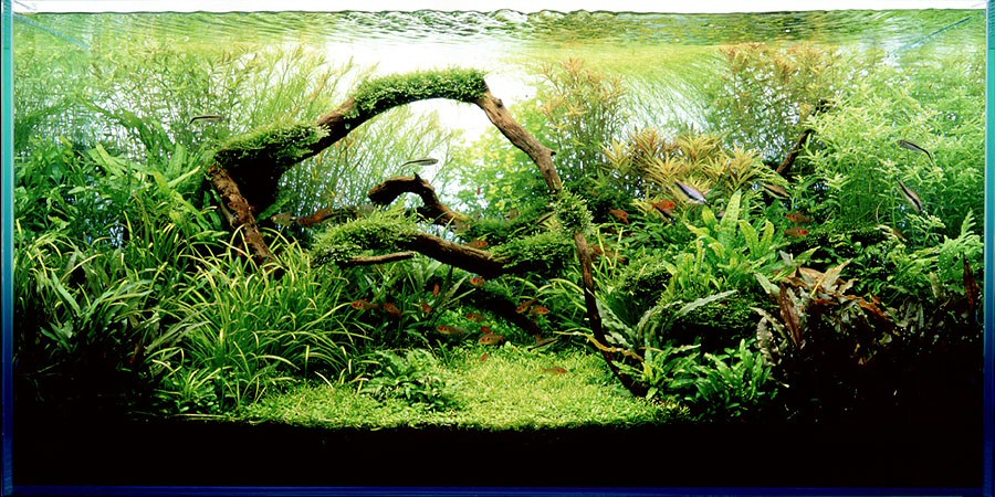 Aquascaping Styles