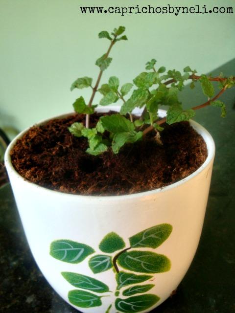 Hortelã em vaso na decoração de varanda