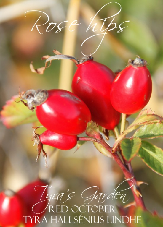 Does Nature Made Vitamin C Have Rose Hips