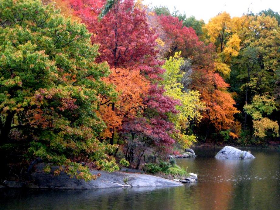 autumn fall tree backgrounds - photo #45