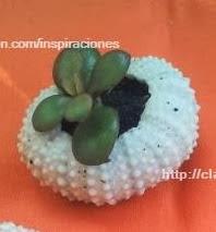 http://clarabelen.com/inspiraciones/3537/para-regalar-mini-macetas-hechas-con-caparazones-de-erizos-de-mar/