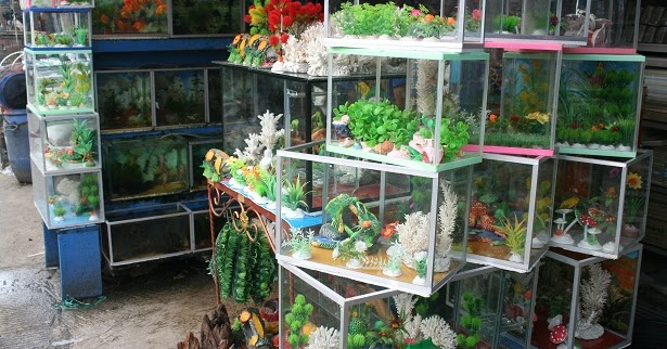 King Fish Aquarium: CONTACT US